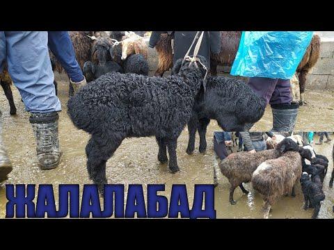 1-2-3 АЙЛЫК Козулар КОП Болду ОПТОМ Арзан ЖАЛАЛАБАД 07/03/2020