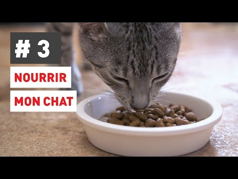 Comment Nourrir Parfaitement Mon Chat ?