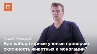Исследования моногамии у животных — Андрей Чабовский