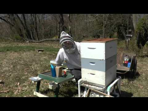 Adventures in Beekeeping - Split gone wrong