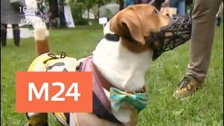 Москвичи выбрали домашних питомцев на выставке собак из московских приютов - Москва 24