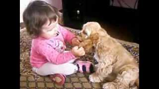 Кокер-спаниель и малышка (Cocker Spaniel and Baby)