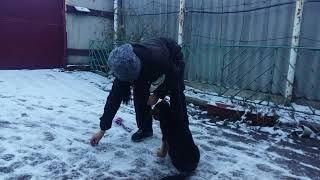 обучение щенка немецкой овчарки №2