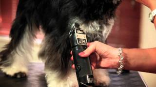 Grooming Miniature Schnauzers - With Ewa Highland Trailer Withewa.com