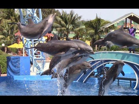 Dolphin Days (Full Show) at SeaWorld San Diego 6/20/16