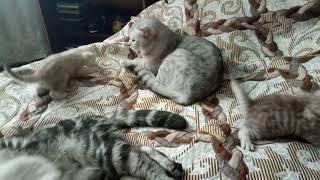 Котятам 1 месяц!