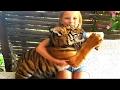 Обычная Еда против Мармеладной КОРМИМ ТИГРЕНКА  Тайная Жизнь Животных Видео для Детей