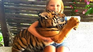 Дети не боятся тигра !
