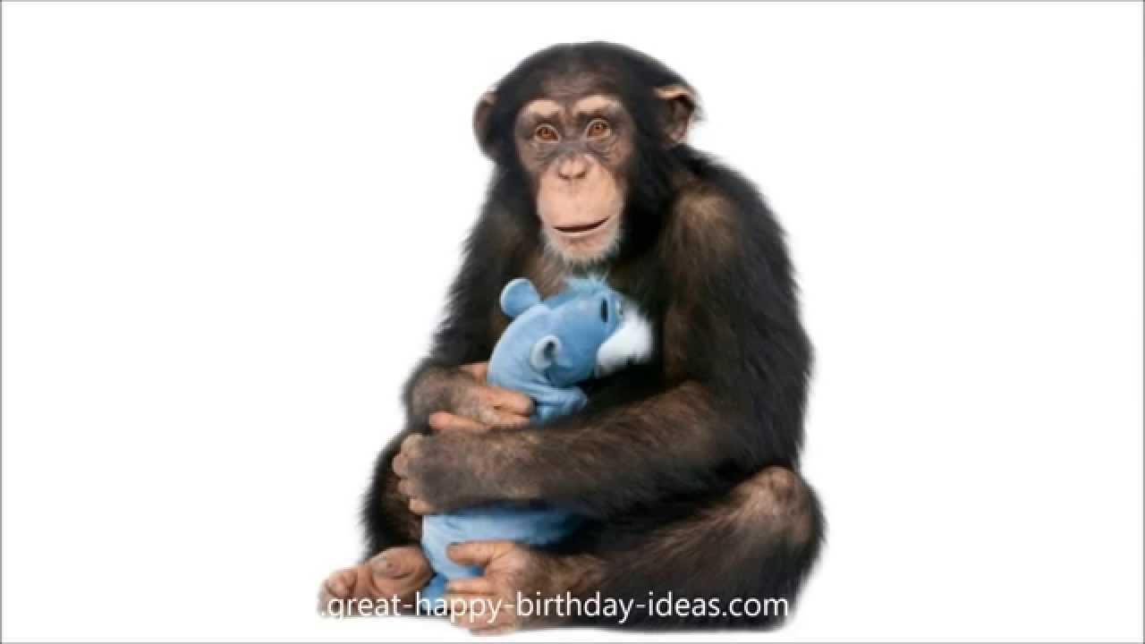 funny happy birthday song monkeys sing happy birthday to - 700×394
