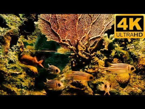 Beautiful Coral Reef Aquarium  4K REAL TIME  sound of ocean waves