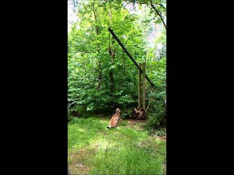 Lynx Slow-Mo Jump || ViralHog