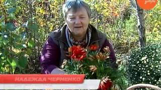 видео Гацания фото выращивание