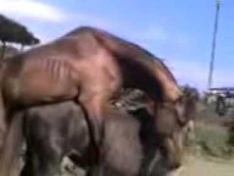 xxx con mujeres y caballos FREE MOVIES - FREE PORN