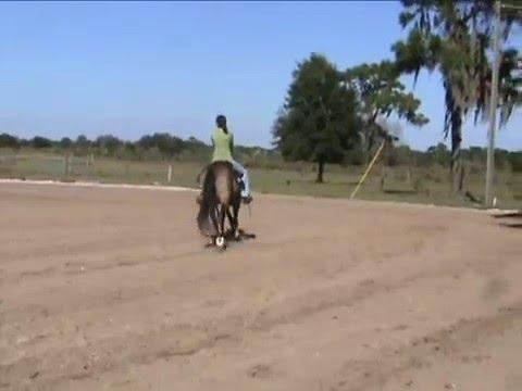 Jess Horse