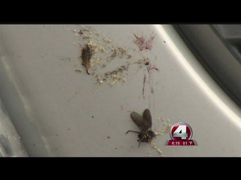 Don't let love bugs ruin your car's paint job