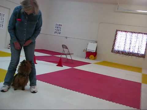 Wally Novice Trick Dog Title full size.wmv