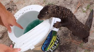 Training BABY Otter To Hunt Fish!!