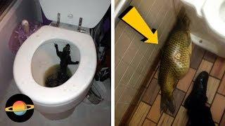 10 najdziwniejszych rzeczy, które znaleziono w toalecie