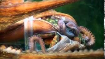 WDR Die maus - Warum hat der Octopus acht Arme
