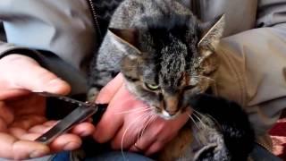 Стрижка когтей у кошки