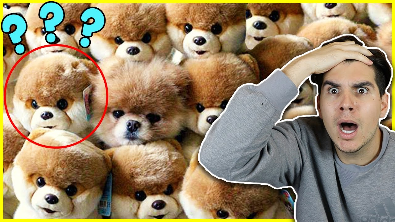 Try To Spot The Odd One Out! - YouTube |Hampsters The Odd Ones Out