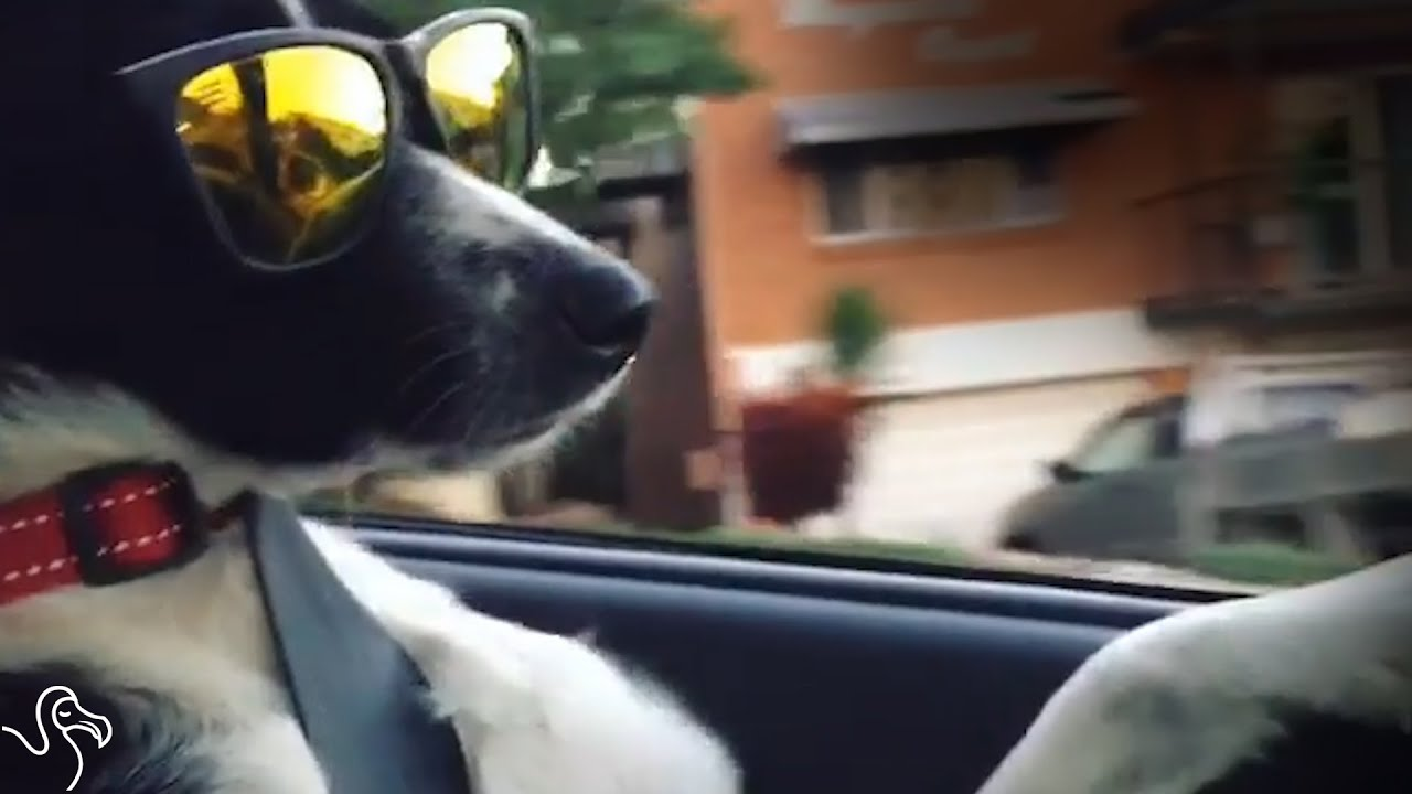 Shelter Dog Was Shy Until She Learned To Surf