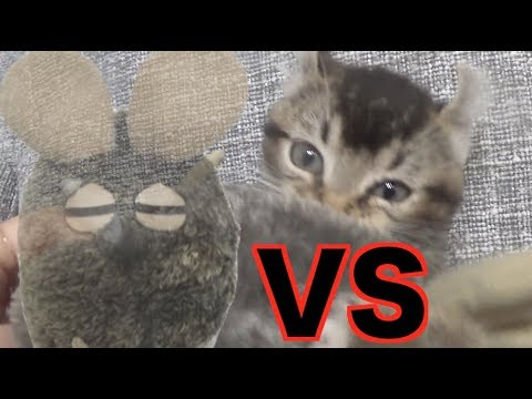 【LON】 Cat VS Mouse