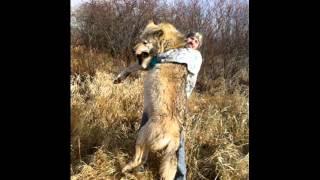 驚くほど巨大な動物 イヌやネコなどなど 巨大なイヌやねこなど身近にい...