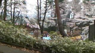 富士森公園(花見・さくら)