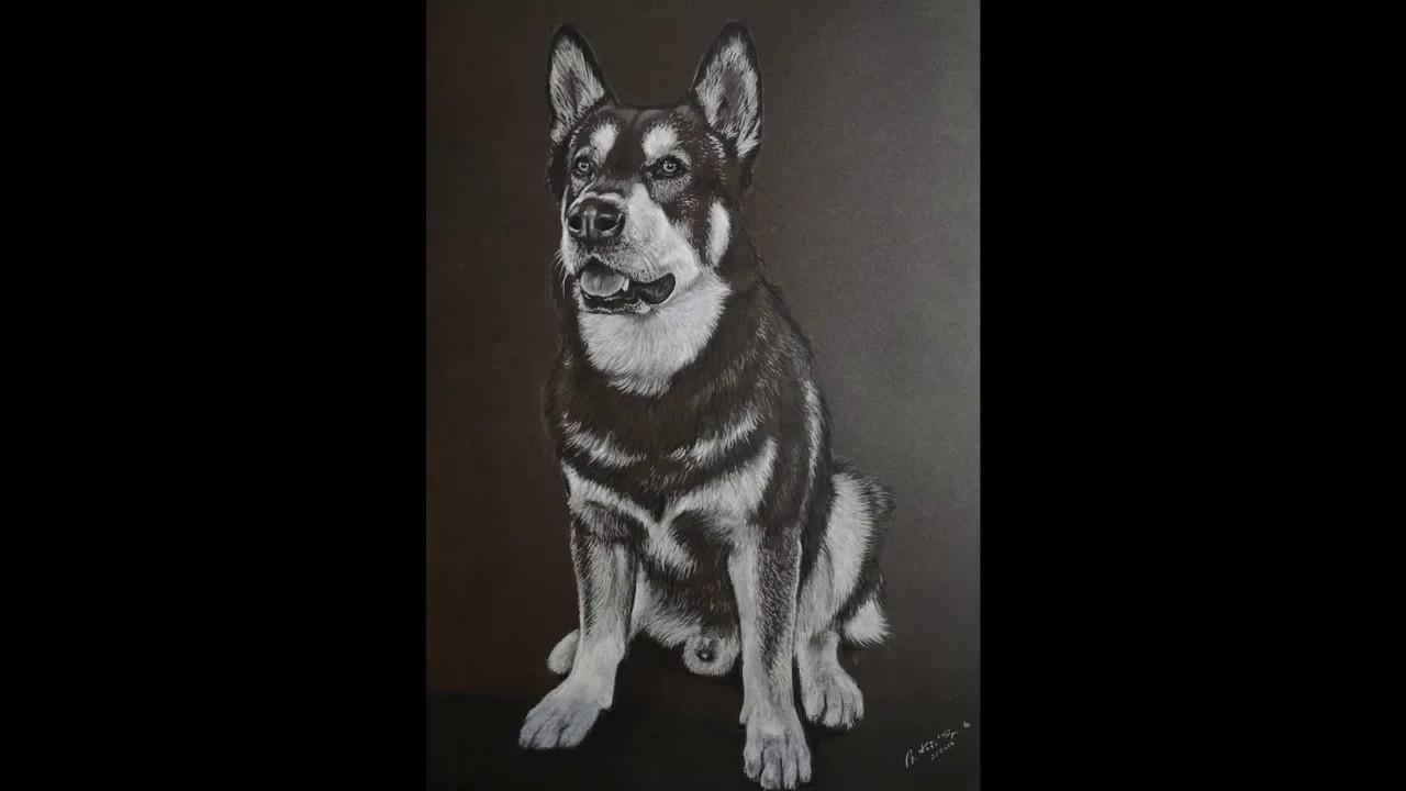 Drawing Of A Dog On Black Paper Kresba Psa Postupove Foto Youtube