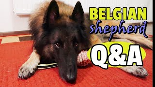 Typical Day with Belgian Shepherd Tervuren | Puppy Crate and OffLeash Training Q&A