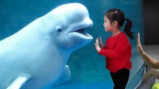 큰 물고기들은 어디에 있을까요?!! 서은이의 한화 아쿠아리움 수족관 체험 상어 펭귄 Aquarium Shark Penguin
