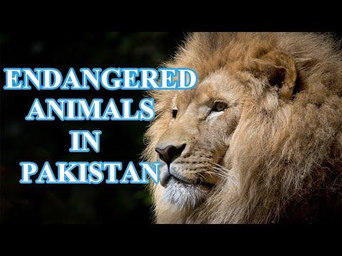 Top 10 Endangered Animals in PAKISTAN | Endangered Species | Animal Globe