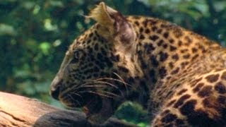 Konflik antara manusia dan satwa liar di taman nasional di Indonesia