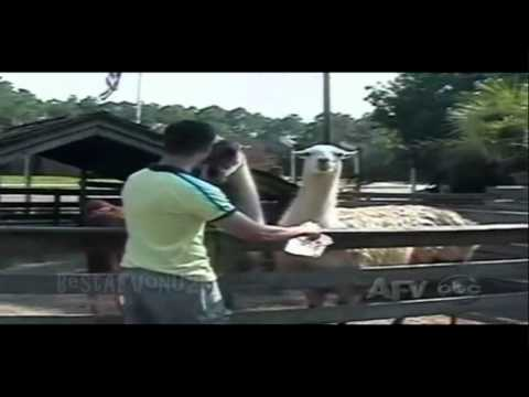 ☺ AFV Part 95 (NEW!) America's Funniest Home Videos 2011 | OrangeCabinet