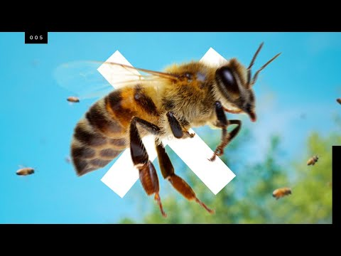 Bees are going extinct...but not the ones you think