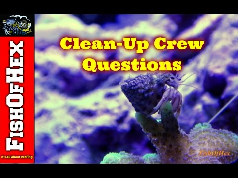 Clean-Up Crews   Answering Beginner Questions Part 5