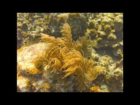 Grand Cayman - Casuarina Point Reef - Mobile.m4v