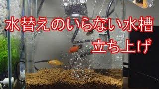 水替えのいらない水槽立ち上げ 【ブルカミア】 thumbnail