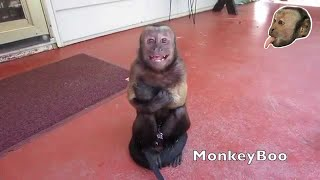 Capuchin Monkey Cry Baby!