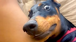 Silly Animal Reaction & Bloopers | Funny Pet Videos