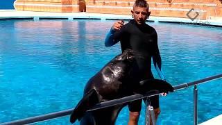 Funny Seals & Sea Lions Show | Dolphinpark Sealanya | Turkey