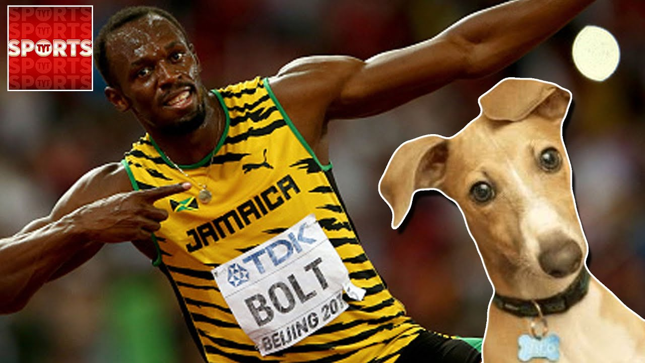 Usain Bolt Races U2026dogs