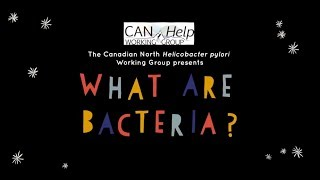 What are bacteria?