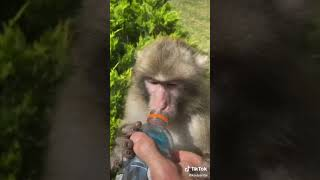 Cute and Funny Animals of TikTok Compilation