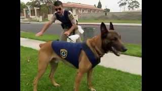 Reno 911! - Dog Training Exercise