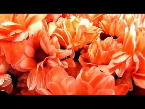 Цветы в Новоуральске. Хризантема.из YouTube · Длительность: 2 мин39 с  · Просмотров: 428 · отправлено: 23.10.2012 · кем отправлено: нескучный сад новоуральск