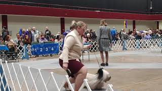 1.4.20 LOLKC Skye Terrier Best of Breed Conformation Show