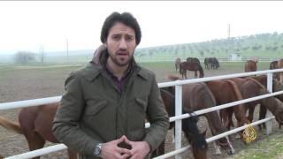 هذا الصباح- الخيول العربية الأصيلة.. شهرة جابت الآفاق بتركيا