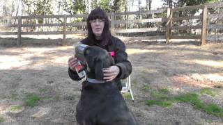 Kyle, Labrador, Episode 8 (muzzle Training 2) - Sunl-atlanta Dog Training